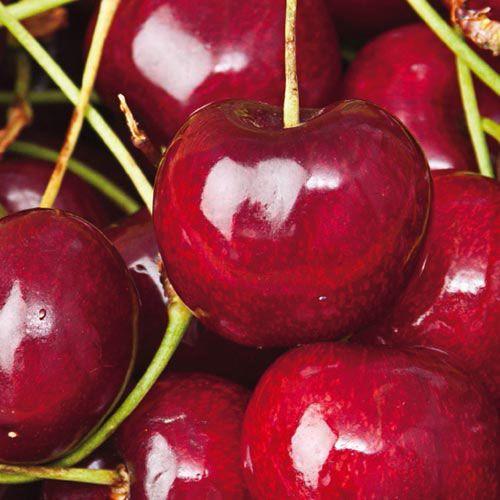 Sweetheart Sweet Cherry Tree