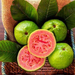 Guava Tree 'Ruby Supreme'