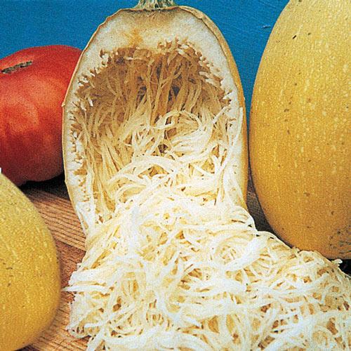 Vegetable Spaghetti Winter Squash Seed
