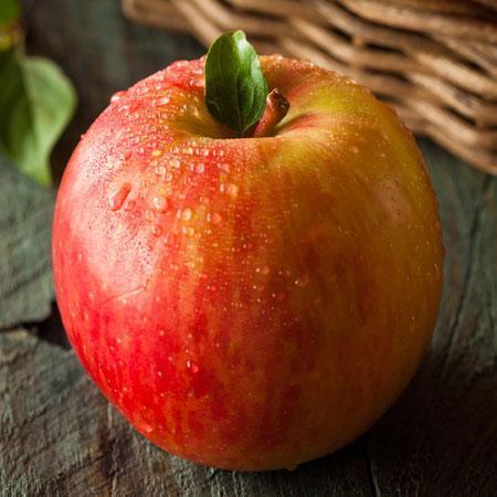 Fuji Apple Tree - USDA Organic