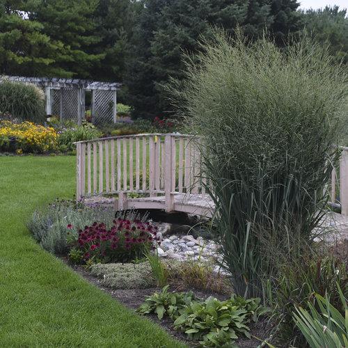 Prairie Winds 'Totem Pole' - Switch Grass - Panicum virgatum