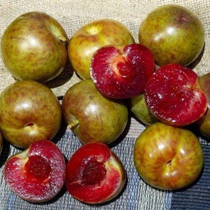 Flavor Supreme Pluot fruit