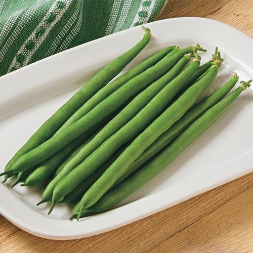 Jade II Bush Bean Seed