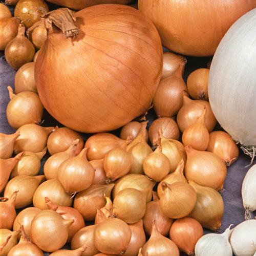 Yellow Onion Set